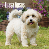 Lhasa Apsos - 2017 Calendar Calendars