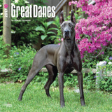 Great Danes - 2017 Calendar Calendars
