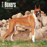 Boxers - 2017 Calendar Calendriers