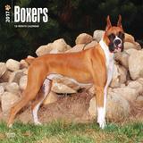 Boxers - 2017 Calendar Kalenders