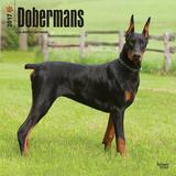 Dobermans - 2017 Calendar Calendars