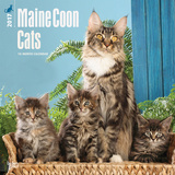 Maine Coon Cats - 2017 Calendar Calendarios