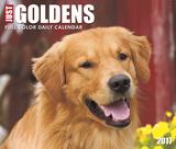 Just Goldens - 2017 Boxed Calendar Kalendarze