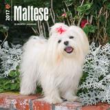Maltese - 2017 Mini Calendar - Takvimler
