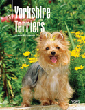 Yorkshire Terriers - 2017 Planner Calendars