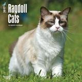 Ragdoll Cats - 2017 Calendar - Takvimler