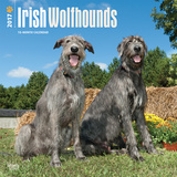 Irish Wolfhounds - 2017 Calendar Calendriers