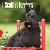 Scottish Terriers - 2017 Calendar Calendarios