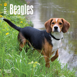 Beagles - 2017 Mini Calendar Kalendarze