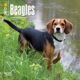 Beagles - 2017 Mini Calendar - Takvimler