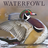 Waterfowl - 2017 Calendar Calendriers