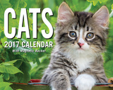 Cats - Mini Boxed Calendar Calendars