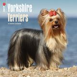 Yorkshire Terriers - 2017 Calendar Kalendarze