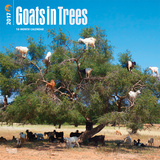 Goats in Trees - 2017 Calendar Calendriers