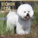 Bichon Frise - 2017 Calendar Kalendarze