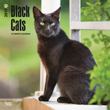 Black Cats - 2017 Calendar Kalendarze