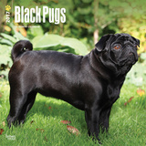 Black Pugs - 2017 Calendar Calendars