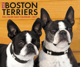 Just Boston Terriers - 2017 Boxed Calendar Kalendarze