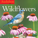 Audubon Wildflowers - 2017 Calendar Calendarios