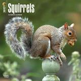 Squirrels - 2017 Calendar Calendriers