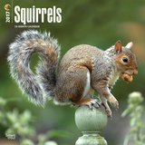 Squirrels - 2017 Calendar - Takvimler