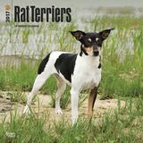 Rat Terriers - 2017 Calendar Kalenders