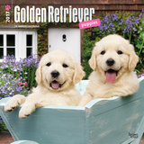 Golden Retriever Puppies - 2017 Calendar Calendars