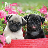 Pug Puppies - 2017 Calendar Kalendáře