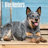 Blue Heelers - 2017 Calendar Kalendarze