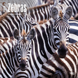 Zebras - 2017 Calendar Calendars