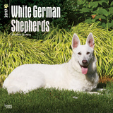 White German Shepherds - 2017 Calendar Calendriers