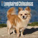 Longhaired Chihuahuas - 2017 Calendar Calendars
