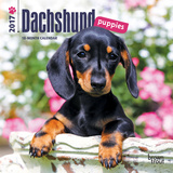 Dachshund Puppies - 2017 Mini Calendar Kalendarze