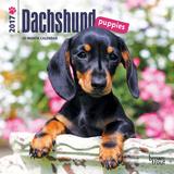 Dachshund Puppies - 2017 Mini Calendar - Takvimler