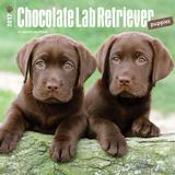Chocolate Labrador Retriever Puppies - 2017 Calendar Calendriers