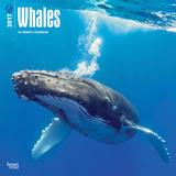 Whales - 2017 Calendar Kalendáře