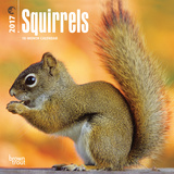 Squirrels - 2017 Mini Calendar Kalendarze
