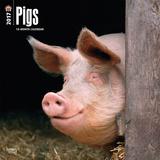 Pigs - 2017 Calendar Calendars