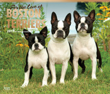 For the Love of Boston Terriers Deluxe - 2017 Calendar Calendars