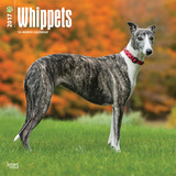 Whippets - 2017 Calendar Calendriers