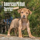 American Pit Bull Terrier Puppies - 2017 Calendar Calendriers