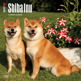 Shiba Inu - 2017 Calendar Kalendarze