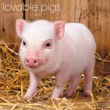 Lovable Pigs - 2017 Calendar Calendars