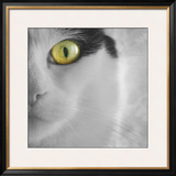 In the Minds Eye Framed Photographic Print by Adrian Campfield