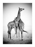 Couple de girafes Julisteet tekijänä Michel&Christine Denis-Huot