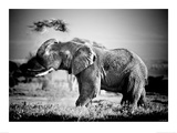 Elephant - Kenya Kunst af Michel&Christine Denis-Huot