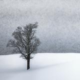 Lonely Tree Idyllic Winterlandscape Giclée-trykk av Melanie Viola