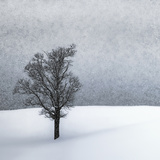 Lonely Tree Idyllic Winterlandscape Art by Melanie Viola
