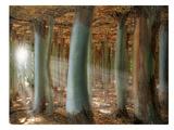 Odd Forest Giclée-trykk av Melanie Viola