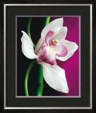 Orchid Prints by Amelie Vuillon